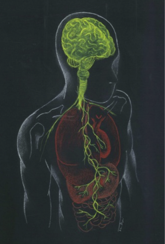 Figure 1: Representation of the microbiota–gut–brain axis highlighting interactions between enteric microbiota, central and enteric nervous systems.